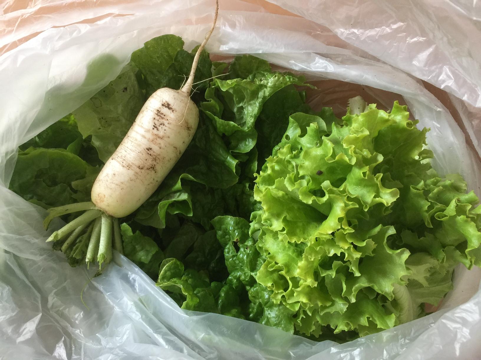 夏野菜の苗植え・種まき~収穫まで 貸農園でのひと夏の思い出