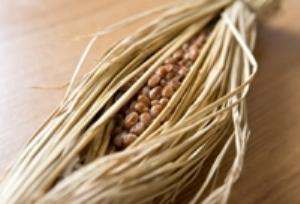 トリプトファンを含む食材 納豆